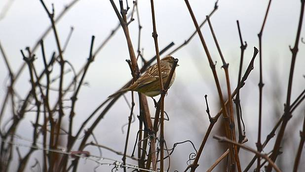 Young Bird in Foggy Vineyard by Alex King