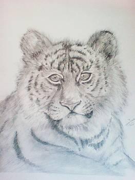 young Tiger by Jaiteg Singh