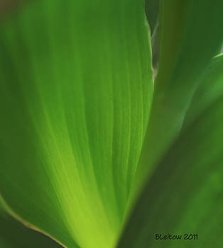 Yours truly Green by Brenda Leitow