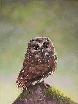 Youth Before Wisdom by Sean Conlon