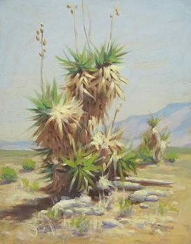 Yucca Cactus by Texas Tim Webb