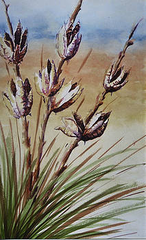 Yucca by Karla Horst