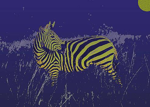 Zebra at Night by Jim Kuhlmann