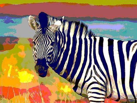 Zebra by Charles Shoup