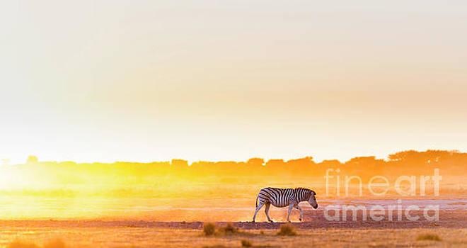 Tim Hester - Zebra Sunset Africa