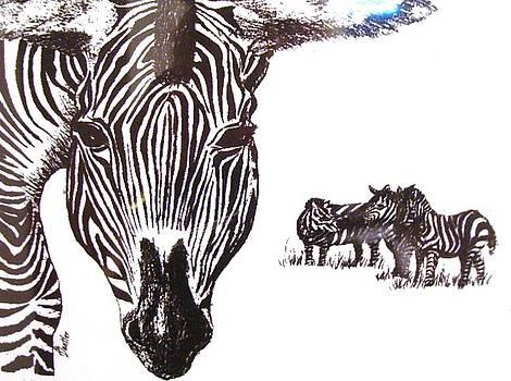 Zebras by AnnE Dentler