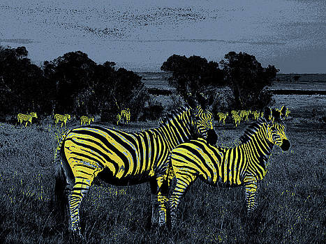 Zebras at Night by Jim Kuhlmann