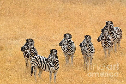 Zebras by Laurianna Taylor