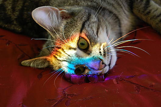 Zeke's Rainbow  by Eddy Bateman