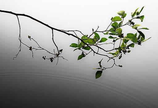 Zen by Antonio Gruttadauria