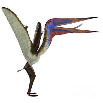 Corey Ford - Zhejiangopterus Reptile
