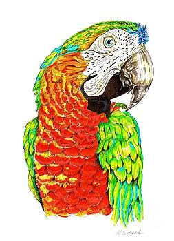 Ziggy Macaw by Karen Sirard