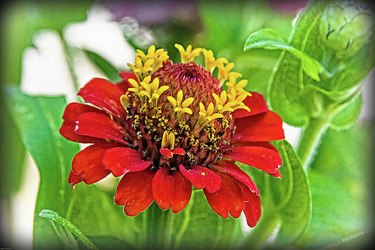 Zinnia Detail by Mick Anderson