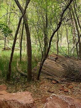 Martina Fagan - Zion woods
