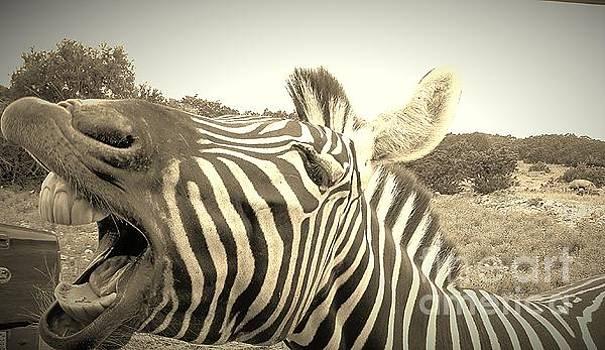 Zippy Zebra by Brigitte Emme
