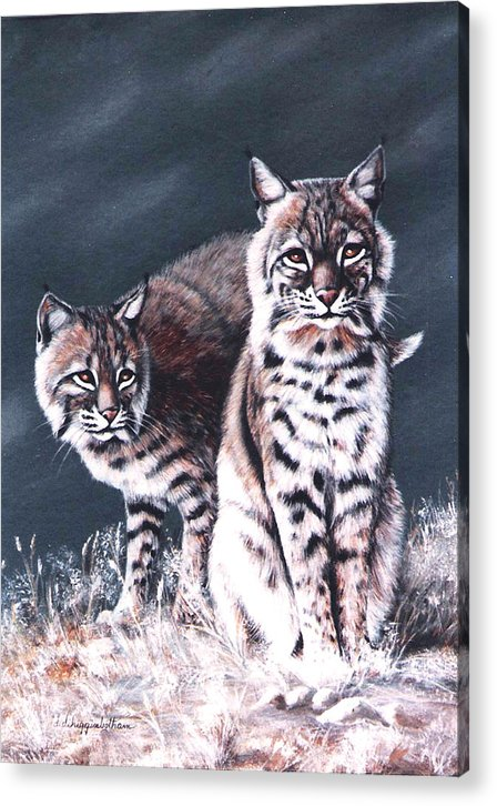 Bobcat Acrylic Print featuring the painting Bobcats In The Hood by DiDi Higginbotham