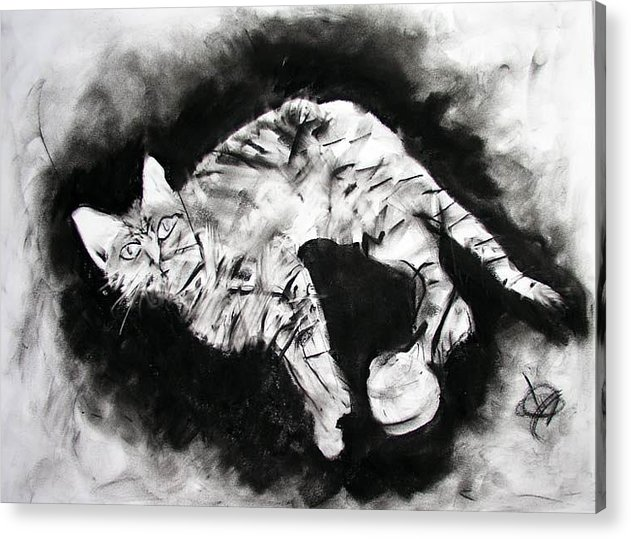 Kitten Acrylic Print featuring the drawing Olive by Brad Wilson