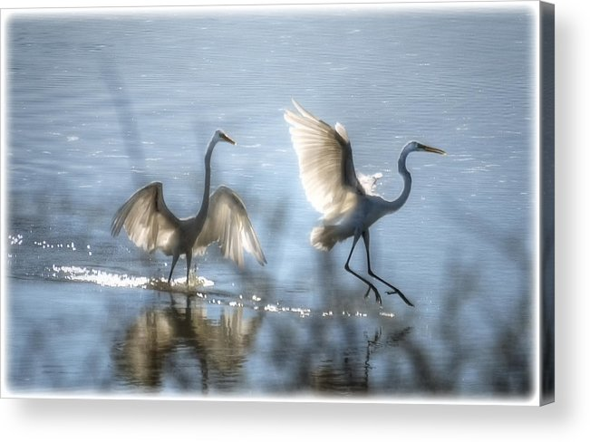 White Egret Acrylic Print featuring the photograph Water Ballet by Saija Lehtonen