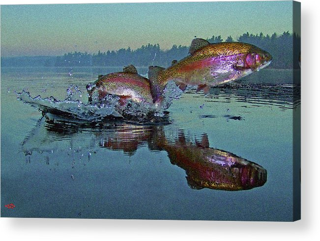 Rainbow Trout Acrylic Print featuring the photograph Dance Of The Trout by Brian Pelkey