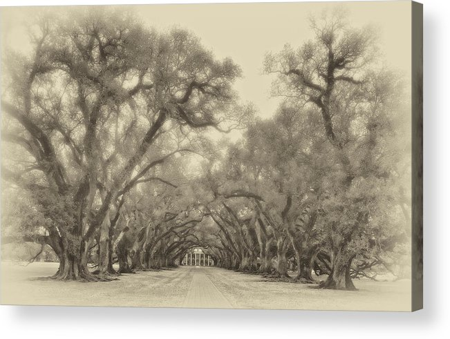 Oak Alley Plantation Acrylic Print featuring the photograph And Time Stood Still Sepia by Steve Harrington