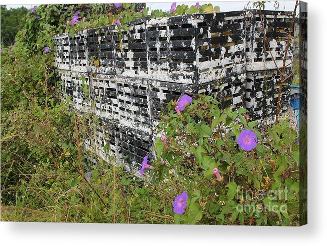 Morning Glories Acrylic Print featuring the photograph Morning Glories And Crab Traps by Theresa Willingham