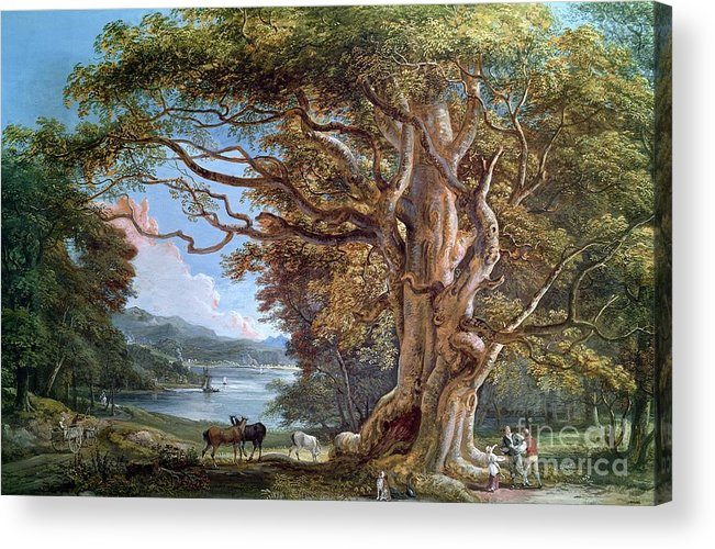 Ancient Acrylic Print featuring the painting An Ancient Beech Tree by Paul Sandby