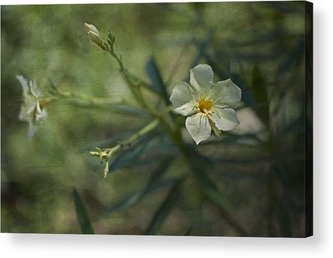 Flowers Acrylic Print featuring the photograph ... by Mario Celzner