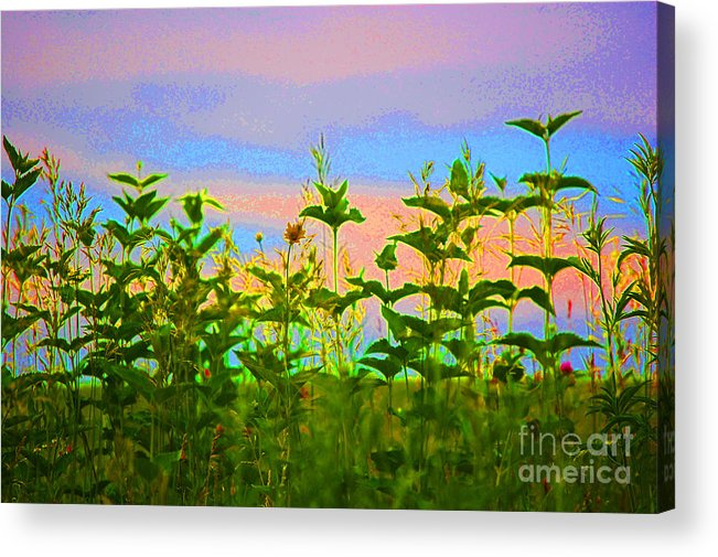 First Star Art Acrylic Print featuring the photograph Meadow Magic by First Star Art