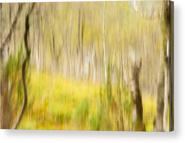 Abstract Acrylic Print featuring the photograph Abstract Forest Scenery by Gry Thunes