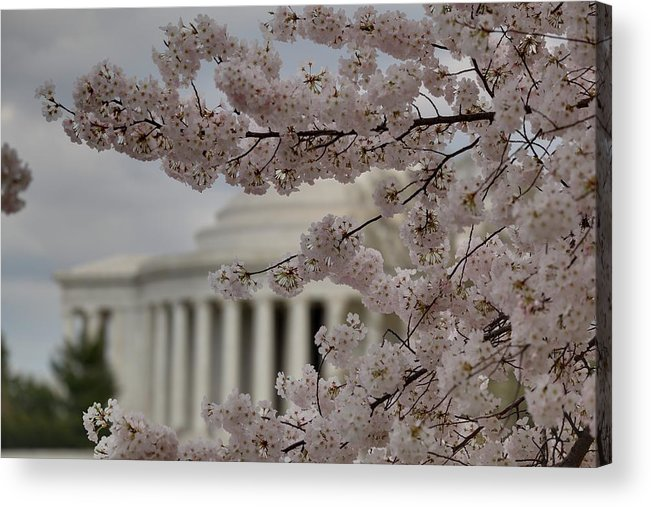 America Acrylic Print featuring the photograph Cherry Blossoms With Jefferson Memorial - Washington Dc - 01134 by DC Photographer