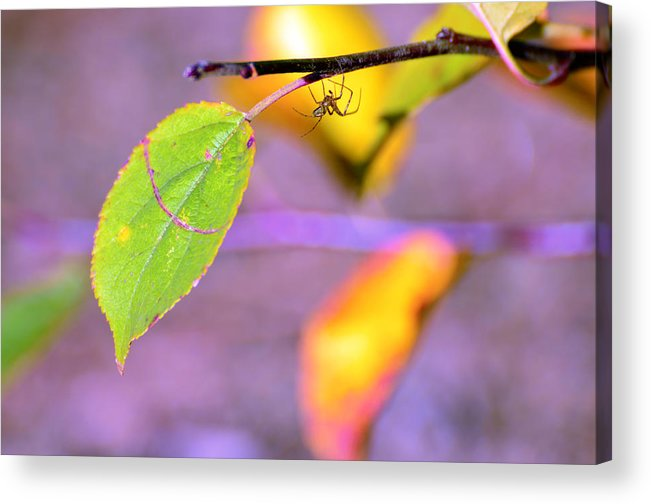 Leafs Acrylic Print featuring the photograph A Branch With Leaves by Toppart Sweden