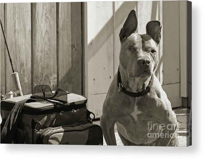 Cindi Ressler Acrylic Print featuring the photograph Avery by Cindi Ressler