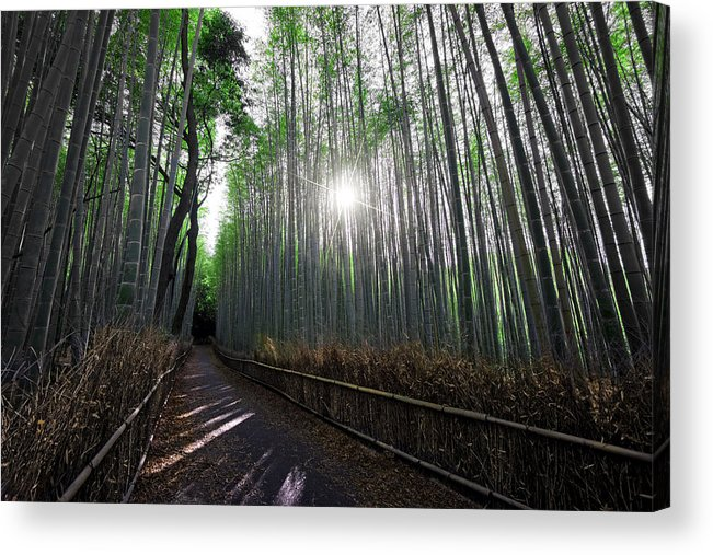 Bamboo Acrylic Print featuring the photograph Bamboo Forest Path Of Kyoto by Daniel Hagerman