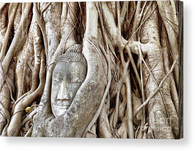 Asia Acrylic Print featuring the photograph Buddha Head In Tree Wat Mahathat Ayutthaya Thailand by Fototrav Print