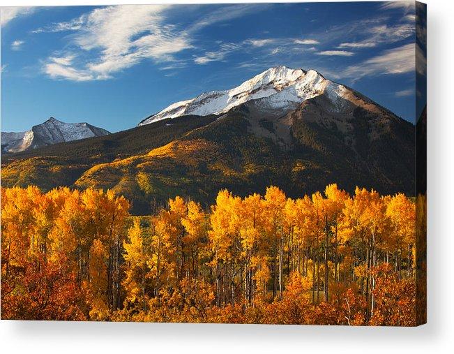 Aspen Acrylic Print featuring the photograph Colorado Gold by Darren White
