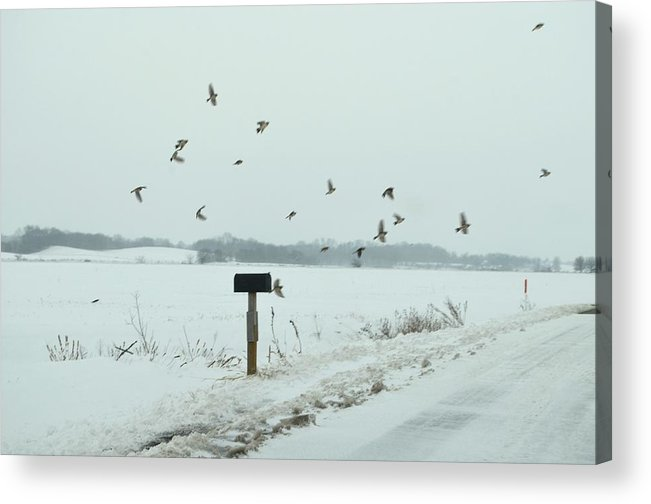 Winter Acrylic Print featuring the photograph Disturbing The Winter Foragers by Julie Dant