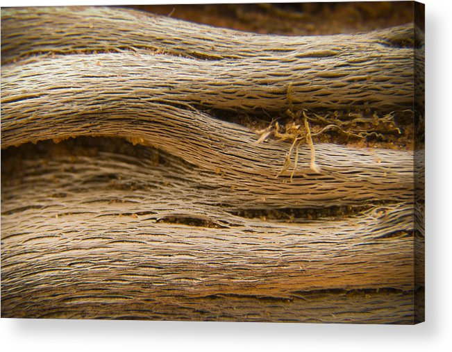3scape Photos Acrylic Print featuring the photograph Driftwood 1 by Adam Romanowicz