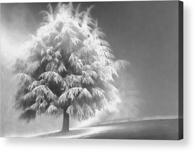 Beauty Acrylic Print featuring the photograph Enlightened Tree by Don Schwartz