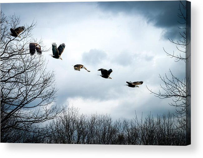 Eagle Acrylic Print featuring the photograph Half Second Of Flight by Bob Orsillo