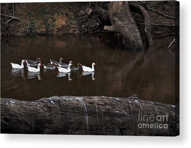 Photography Acrylic Print featuring the photograph Homeward Bound by Kaye Menner