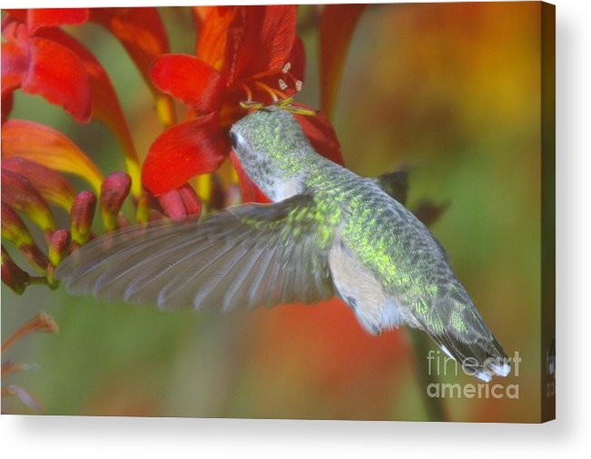 Wings Acrylic Print featuring the photograph Indulgence by Jeff Swan