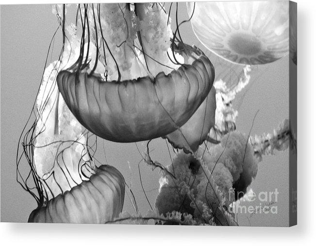 Jelly Fish Acrylic Print featuring the photograph Jellyfish Floating By by Artist and Photographer Laura Wrede