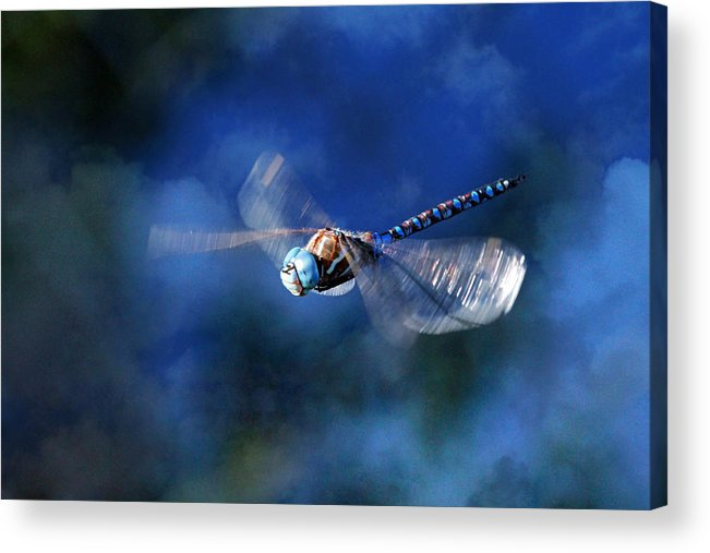 Dragonfly Acrylic Print featuring the photograph Jet Blue by Donna Kennedy