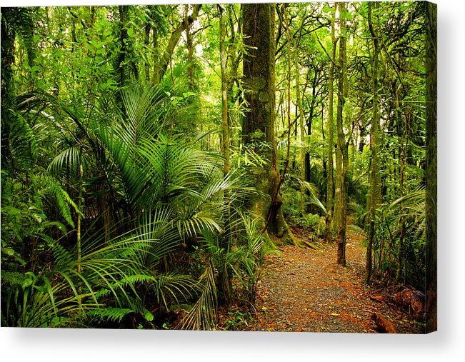 Forest Acrylic Print featuring the photograph Jungle Scene by Les Cunliffe