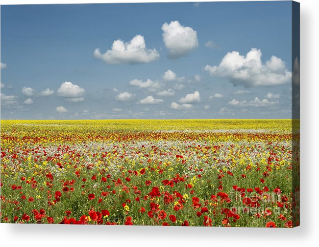 Oxfordshire Acrylic Print featuring the photograph Multicoloured Field by Tim Gainey