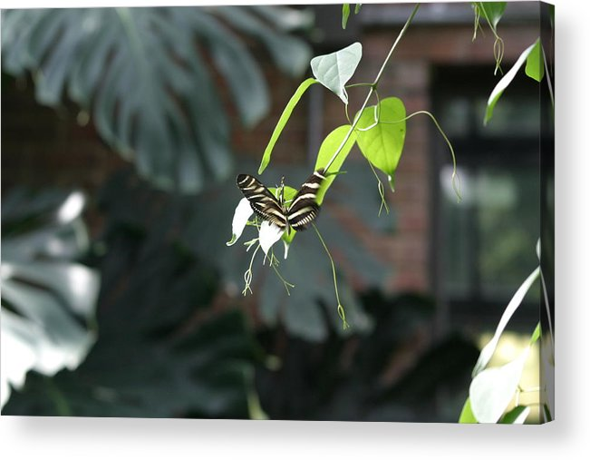 National Acrylic Print featuring the photograph National Zoo - Butterfly - 12124 by DC Photographer