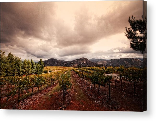 Winery Acrylic Print featuring the photograph Orfila by Ryan Weddle