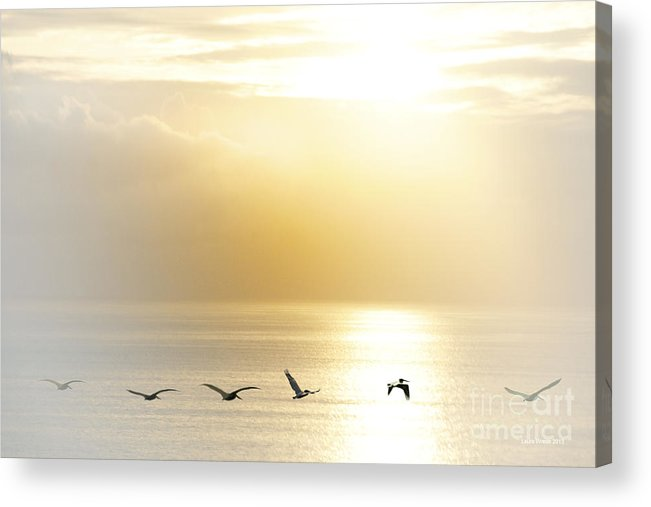 Pelican Art Acrylic Print featuring the photograph Pelicans Over Malibu Beach California by Artist and Photographer Laura Wrede