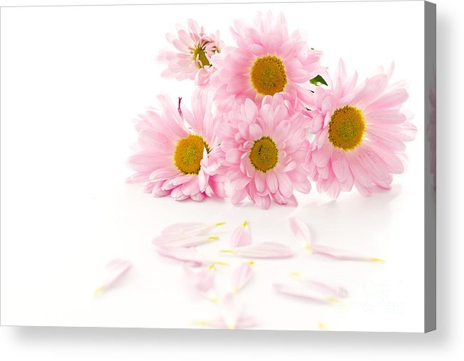 Pink Chrysanthemums Acrylic Print featuring the photograph Pink Chrysanthemums Beautiful by Boon Mee