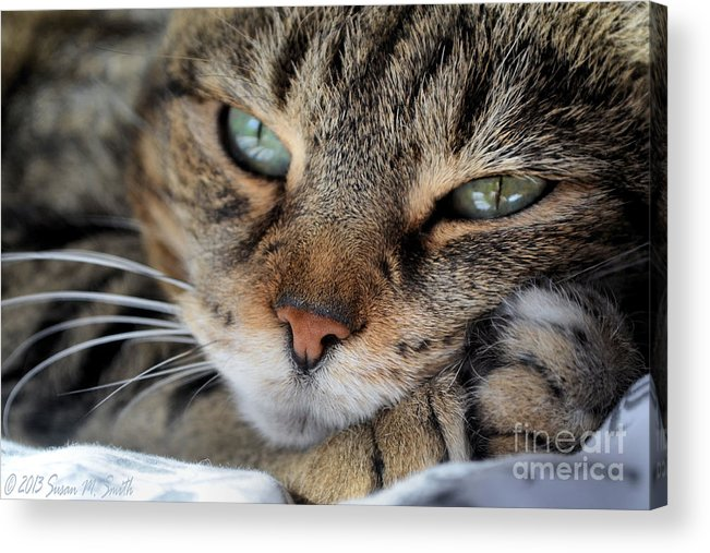 Photography Acrylic Print featuring the photograph Rest by Susan Smith